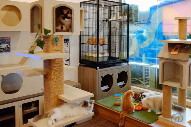 Cutie Cats Cafe, Main Kucing Sambil Mengikuti Therapy Cat
