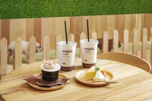 Santai Sambil Minum Teh Bareng Babi-babi Imut di Mipig Cafe
