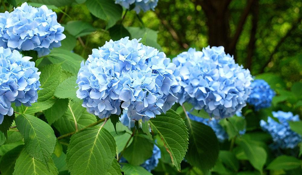 Ingin Kencan Anda Berhasil? Berikan 5 Bunga Ini